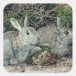 Conejos Pegatina Cuadrada
