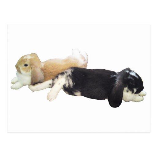Conejos perezosos - fin de semana cansado soñolien tarjeta postal