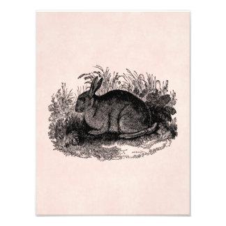Conejos retros de la plantilla del conejito del fotografía