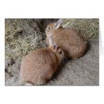 Conejos Tarjetas