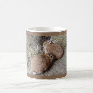 Conejos Tazas De Café