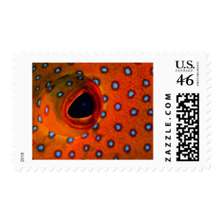 Coney Clown Stamps