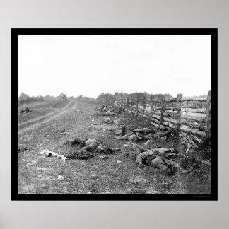 Confederate Casualties at Antietam 1862 Poster