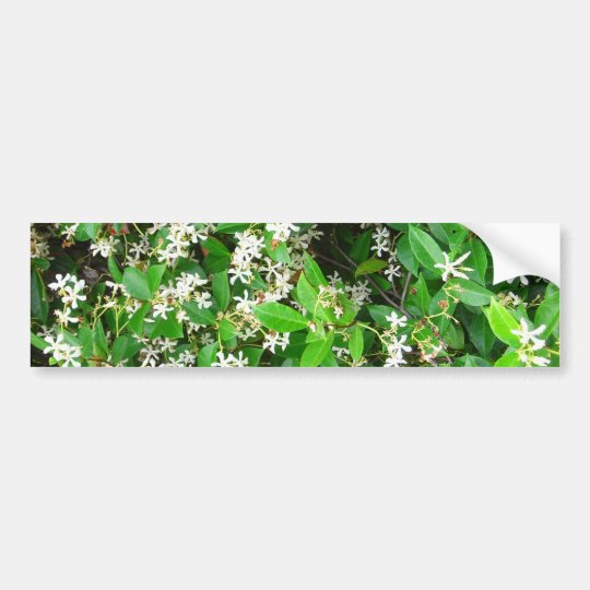 Confederate Jasmine Flowering Leaves Green and Whi Bumper Sticker