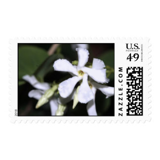 Confederate Jasmine Postage