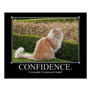 Confidence Cat Artwork Funny Poster at Zazzle