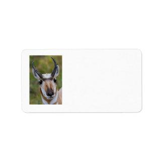 Confidence Custom Address Label