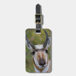 Confidence Luggage Tag