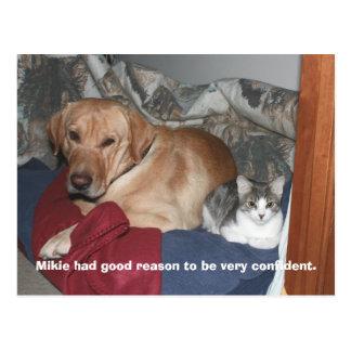 Confidence Postcard