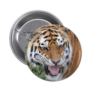 Confidence power and  successAmur Siberian Tiger Pinback Buttons