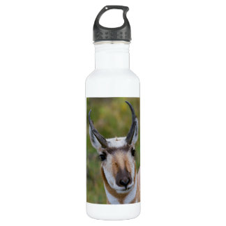 Confidence Stainless Steel Water Bottle