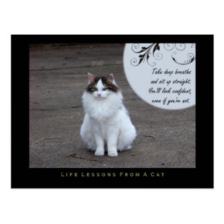 Confident Life Lessons From a Cat Postcard