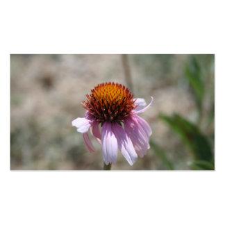 Conflower púrpura en los pétalos de los ratones de plantillas de tarjetas de visita
