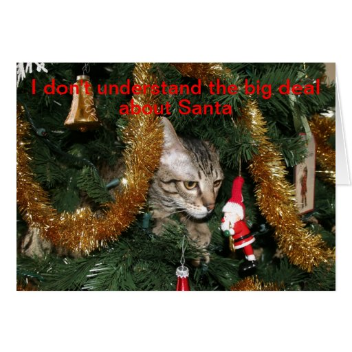 Confused Christmas Cat Cards