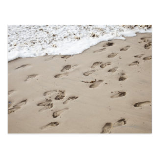 Confused Footsteps in the sand Postcard