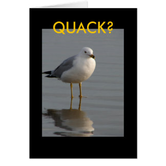 confused gull card
