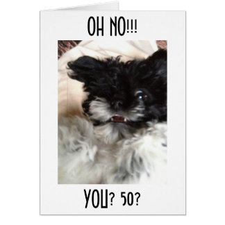 """CONFUSED HAVANESE CAN'T BELEIVE YOU ARE """"50"""" CARD"""