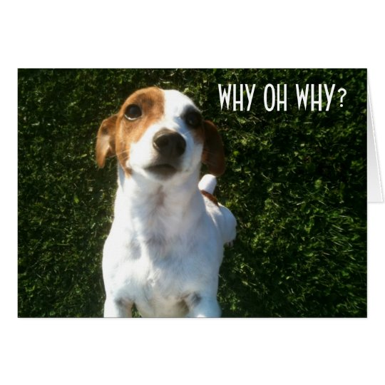 """CONFUSED JACK RUSSELL """"40th"""" BIRTHDAY Card"""