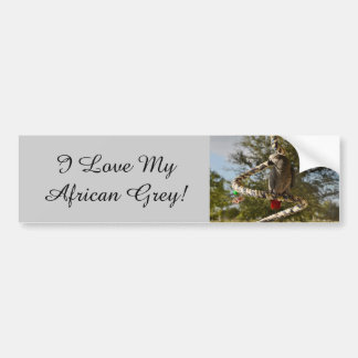 Congo African Grey on a Swing Bumper Sticker