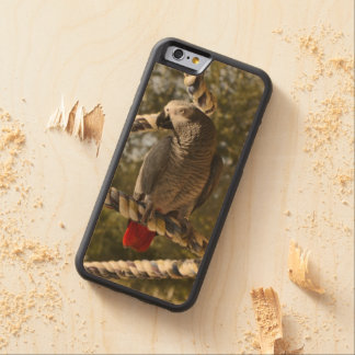 Congo African Grey on a Swing Carved Maple iPhone 6 Bumper Case