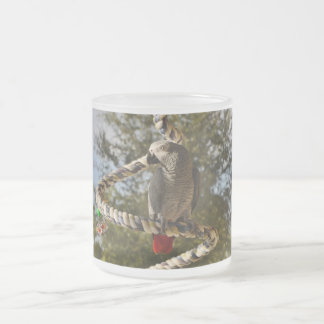 Congo African Grey on a Swing Frosted Glass Coffee Mug
