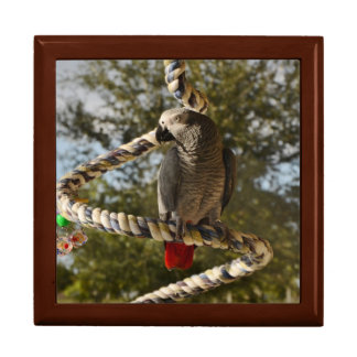 Congo African Grey on a Swing Gift Box