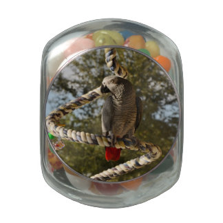 Congo African Grey on a Swing Jelly Belly Candy Jars