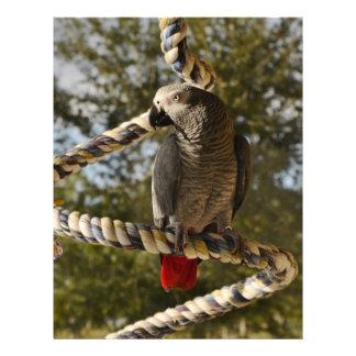 Congo African Grey on a Swing Letterhead