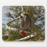 Congo African Grey on a Swing Mouse Pad
