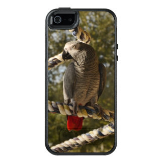 Congo African Grey on a Swing OtterBox iPhone 5/5s/SE Case