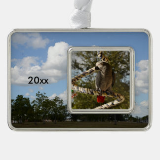 Congo African Grey on a Swing Silver Plated Framed Ornament