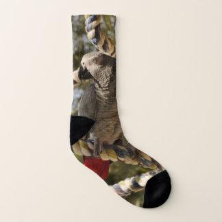 Congo African Grey on a Swing Socks