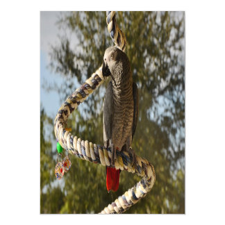 Congo African Grey on a Swing Magnetic Invitations