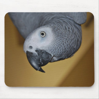 Congo African Grey Parrot Hello Mouse Pad
