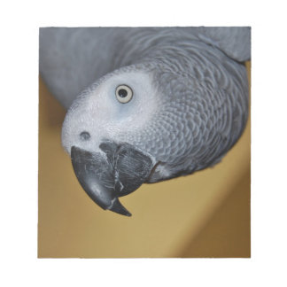 Congo African Grey Parrot Hello Notepad