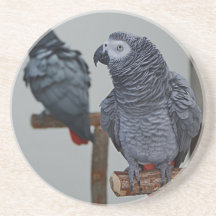 African Grey Parrot Sat In Trees Set of 4 Coasters