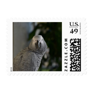 Congo African Grey Parrot Postage