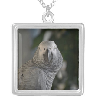 Congo African Grey Parrot Silver Plated Necklace