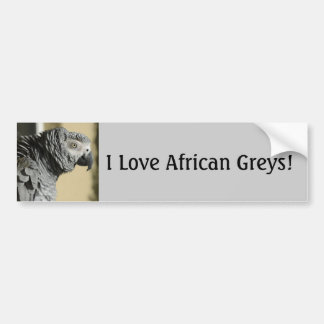 Congo African Grey Parrot with Ruffled Feathers Car Bumper Sticker