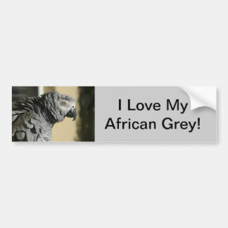 Congo African Grey Parrot with Ruffled Feathers Bumper Sticker