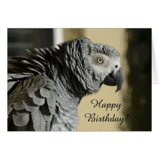 Congo African Grey Parrot with Ruffled Feathers Card