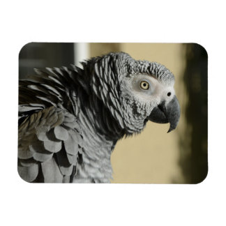 Congo African Grey Parrot with Ruffled Feathers Magnet