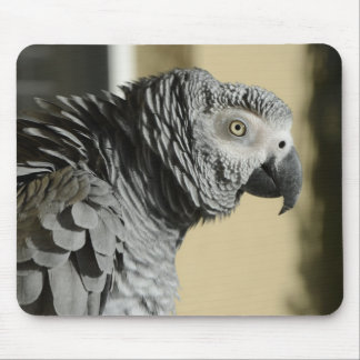 Congo African Grey Parrot with Ruffled Feathers Mouse Pad