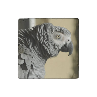 Congo African Grey Parrot with Ruffled Feathers Stone Magnet