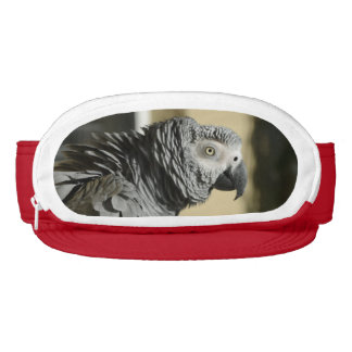 Congo African Grey Parrot with Ruffled Feathers Visor