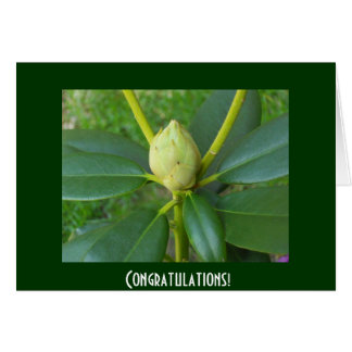 Congratulations card with flower bud photo by  bbi