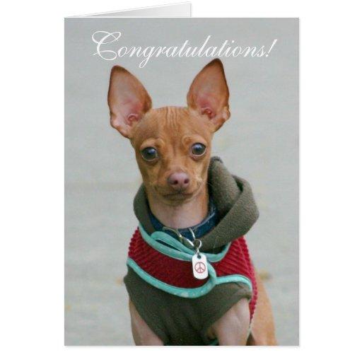 Congratulations chihuahua greeting card