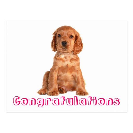 Congratulations Cocker Spaniel Puppy Dog Postcard