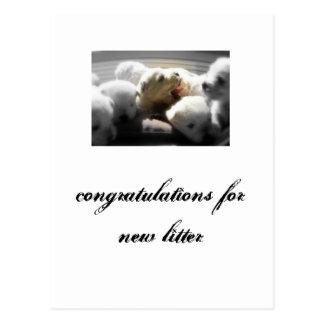 congratulations for new litter; westy postcard