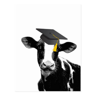 Congratulations Graduation Funny Cow in Cap Postcard